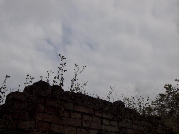 塀の上の雑草。