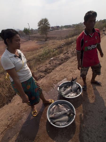 路上の魚売り。メコン川の魚。