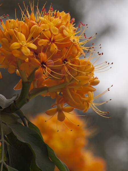 名もない花。正確に言うと、名も知れぬ花。