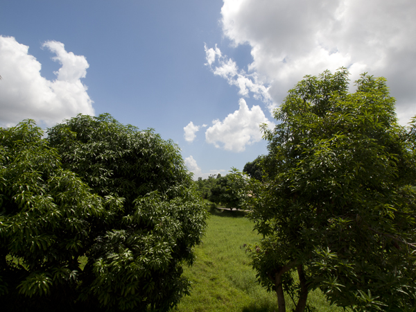 外国人は、フィリピンの土地は買えません。マンションとかは買えます。ダバオの街は人気があり、投資にいいみたいです。