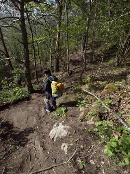 今日のルートは、森が多い。