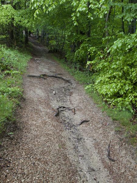 泥だらけの道。