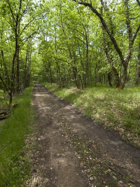 森の中は、道がぬかるんでなければ最高。暑い日も涼しくていい。