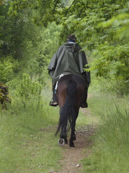 馬の巡礼者。渋いです。