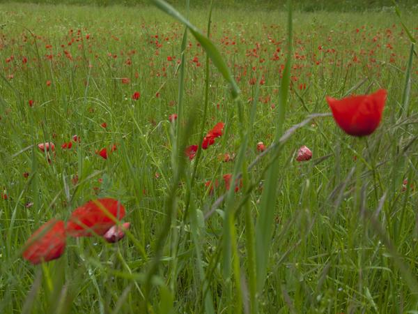 赤い花が咲き乱れてる。