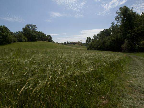 大雨で麦の成長が遅れている。来年、日本でお遍路に挑戦するフランス人が教えてくれました。