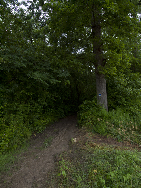 雨の日は、せめて舗装道路を歩きたい。なのに森。