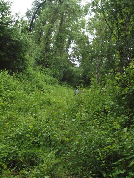泥だらけの巡礼路を捨て、雑草が生い茂る森へ。雨露がズボンを濡らす。