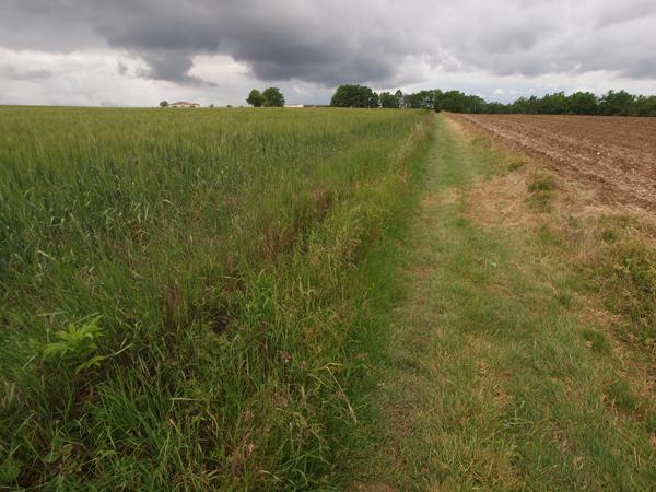 雑草が生えていれば、泥も少ない。