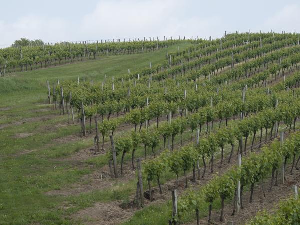 ここ二、三日は、葡萄畑が続きます。ま、あんだけ毎日ワインを飲むんだから、フランス中、葡萄畑にしないと、おいつきそうもないです。