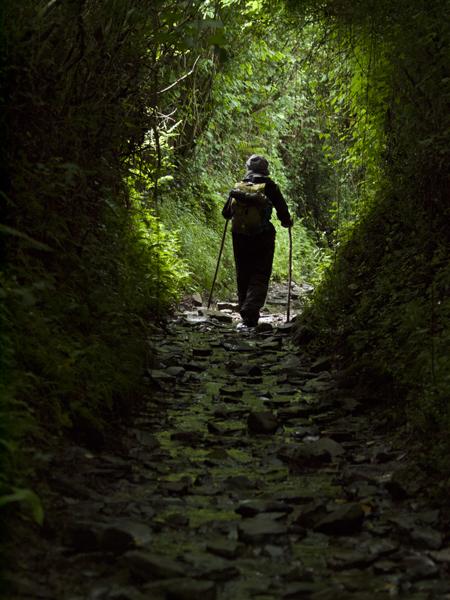 緑のトンネルを抜けると、そこはやはり緑だった。