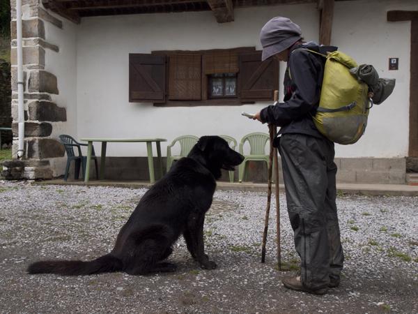 犬に相談するYuko。