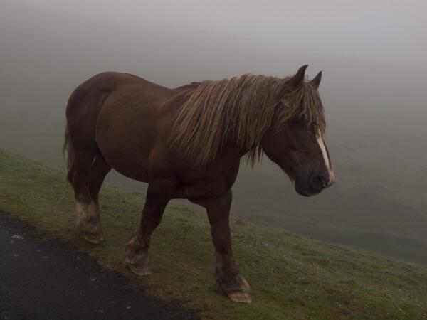 突然現れた馬。驚かすなよー。