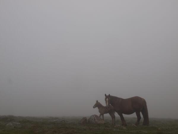 仔馬は、臆病だった。放牧してて、儲かるんですかね?