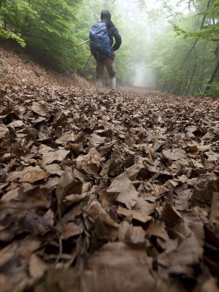 堆積された枯れ葉を踏む。足が沈む。