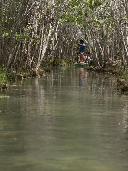 ジャングルのクリークを行く。 20cmくらいの亀が泳いでた。