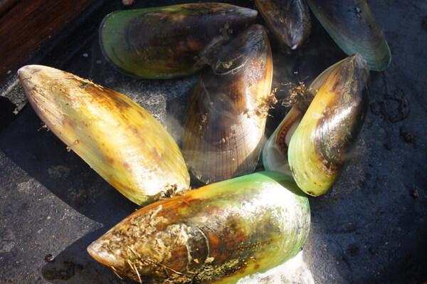 多くの日本人は、ムール貝の正しい味を知っているのだろうか? 余計なお世話だけど、心配です。