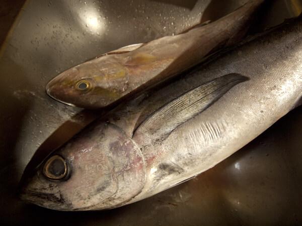 正直言うと、魚はみな同じに見えます。