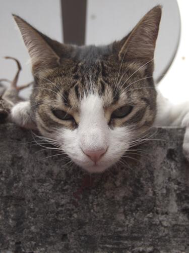 メキシコシティの日本人宿「ペンション・アミーゴ」の猫、フリーダです。