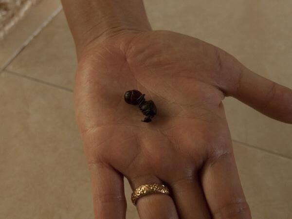 コロンビア人は、蟻を食う。