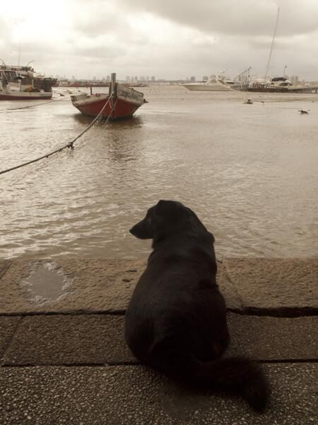 漁港の前の魚の前の犬。一瞬、あざらしが海から出て来て、犬に闘いを挑んだ。
