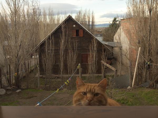 猫はびた一文働かないくせに、物欲しそうな顔だけは一丁前です。