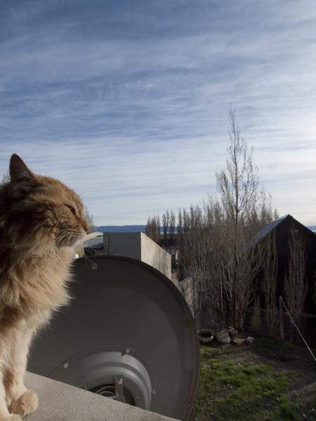 キッチンの窓を根城にする猫。餌をあげてはいけない。