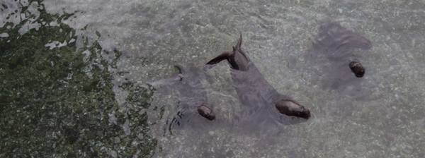 市場の後ろの海は、意外に透明でした。アザラシだかなんだかが、泳いでます。