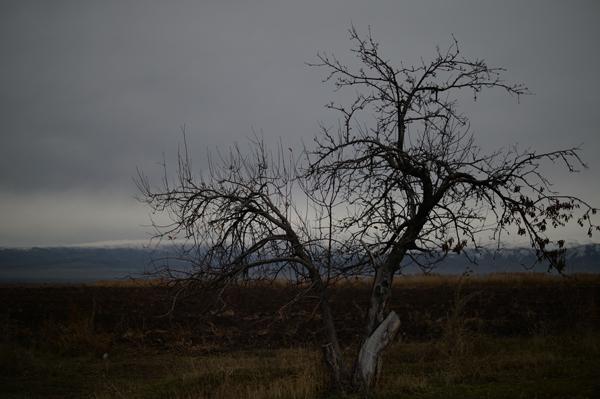 44P_3626